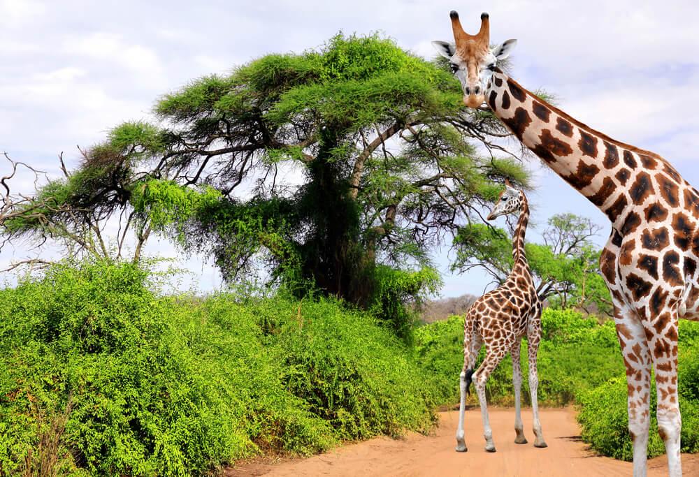 africa-do-sul-turismo-estudo-ou-trabalho-voluntario.jpeg